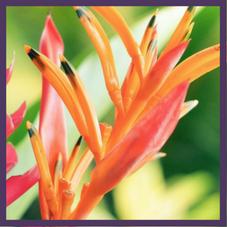 Hawaiian Huna